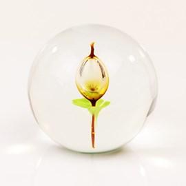 Glazen bol met Tulp